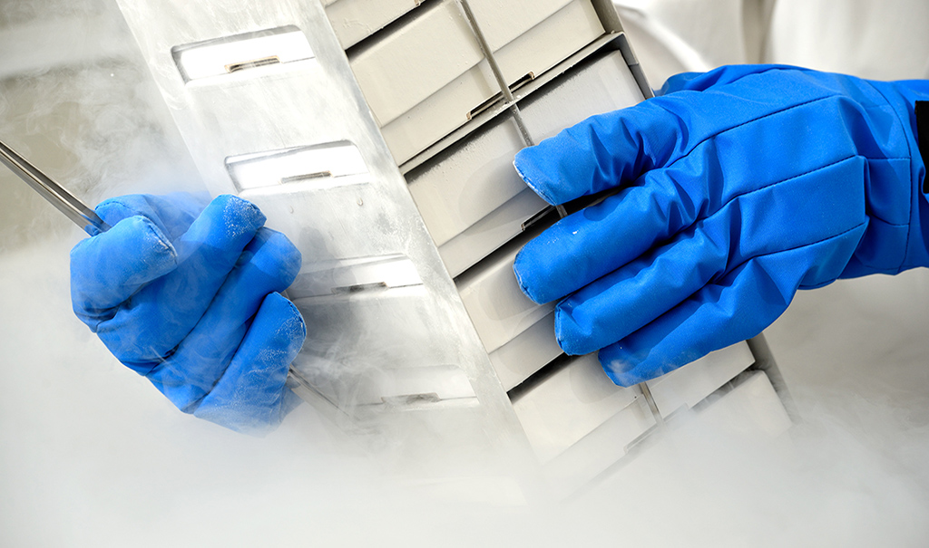 Researcher pulling frozen specimens from a cryo freezer